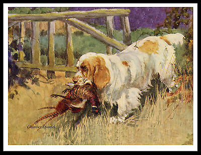 Clumber Spaniel Dog And Bird Great Vintage Style Dog Print Poster