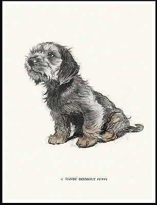 Dandie Dinmont Terrier Seated Puppy Lovely Dog Print Poster