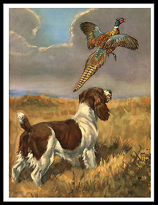 English Springer Spaniel And Pheasant Great Vintage Style Dog Print Poster