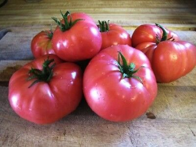 "Rare Organic Vegetable Tomato seeds ""Mikado Pink"" Large. 65 Seeds."