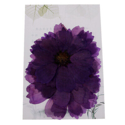 10pcs Pressed Real Dried Flowers Cosmos Flower Scrapbooking Embellishments