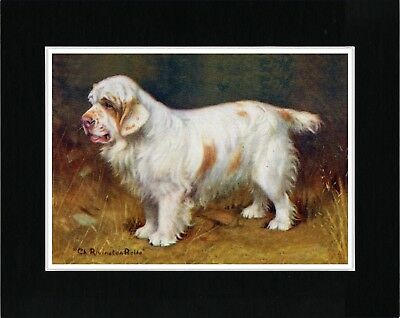 Clumber Spaniel Old Champion Dog Vintage Style Dog Art Print Ready Matted