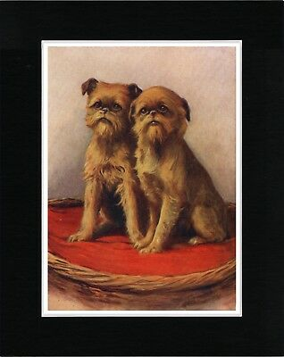 Brussels Griffon Two Little Dogs Charming Dog Art Print Ready Matted