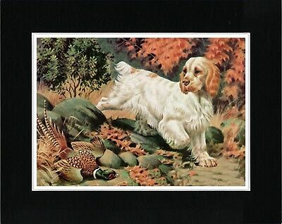 Clumber Spaniel Collecting Bird Vintage Style Dog Print Ready Matted