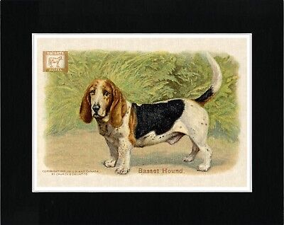 Basset Hound On Lovely Vintage Style Soda Advert Dog Art Print Ready Matted
