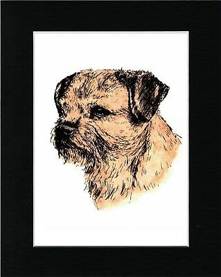 Border Terrier Head Study Lovely Vintage Style Dog Art Print Ready Matted