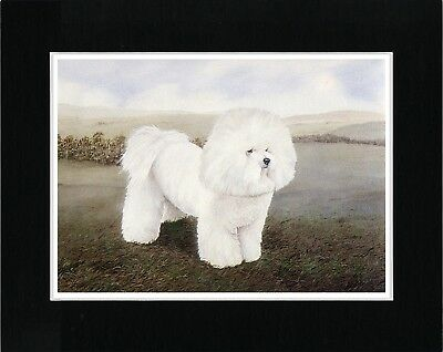 Bichon Frisé Dog print Charming Image Matted ready to Frame