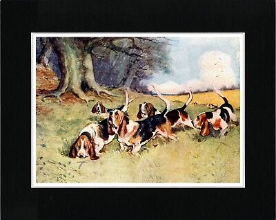 Basset Hound Dog Pack Lovely Vintage Style Dog Art Print Ready Matted