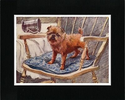 Brussels Griffon In A Chair Lovely Vintage Style Dog Art Print Ready Matted