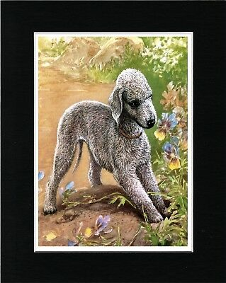Bedlington Terrier Hedgehog Vintage Style Dog Art Print Matted Ready To Frame
