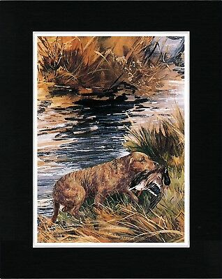Chesapeake Bay Retriever With Duck Vintage Style Dog Art Print Ready Matted