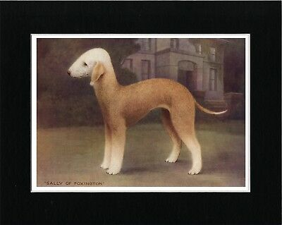 Bedlington Terrier Named Dog Vintage Style Art Print Matted Ready To Frame