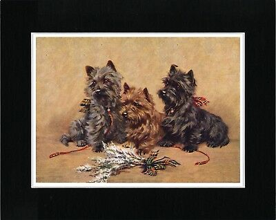 Cairn Terrier Dogs And Heather Vintage Style Dog Art Print Matted Ready To Frame