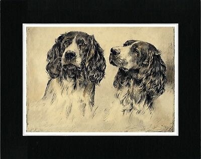 English Springer Spaniel Two Dogs Vintage Style Dog Art Print Ready Matted
