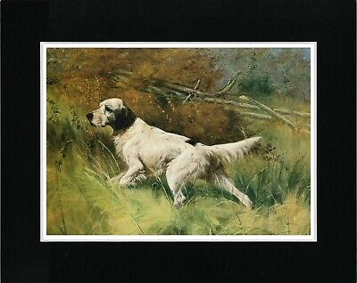 English Setter At Work Great Vintage Style Dog Art Print Ready Matted