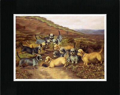 Dandie Dinmont Terrier Group Of Dogs Vintage Style Dog Art Print Ready Matted