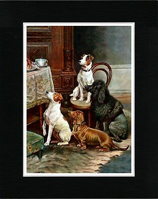 Fox Terrier Dachshund Poodle At Tea Time Vintage Style Dog Art Print Matted