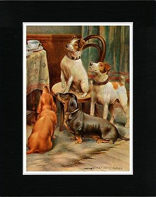 Fox Terrier And Dachshund Dogs At Tea Time Vintage Style Dog Art Print Matted