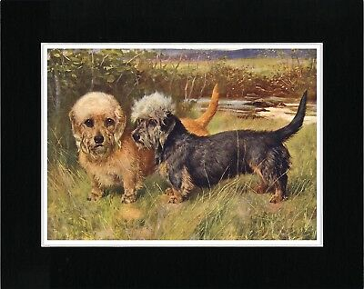 Dandie Dinmont Terrier Two Dogs Vintage Style Dog Art Print Ready Matted