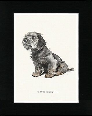 Dandie Dinmont Terrier Seated Puppy Vintage Style Dog Art Print Ready Matted