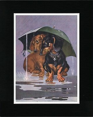 Dachshund Dogs Sheltering Under Umbrella Lovely Vintage Style Print Ready Matted