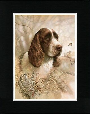 English Springer Spaniel Head Study Vintage Style Dog Art Print Ready Matted