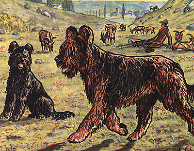 Briard Lovely Dog Greetings Note Card