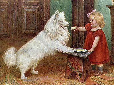 Samoyed And Little Girl Charming Dog Greetings Note Card