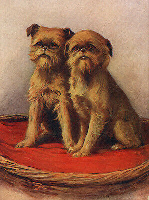 Brussels Griffon Charming Dog Greetings Note Card Two Beautiful Dogs On Cushion
