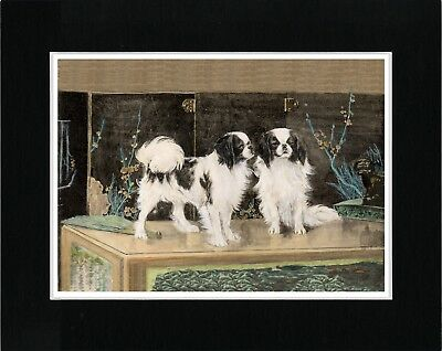 Japanese Chin Dogs Lovely Vintage Style Dog Art Print Ready Matted