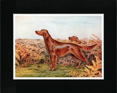 Irish Setter Dogs Great Vintage Style Dog Art Print Matted Ready To Frame