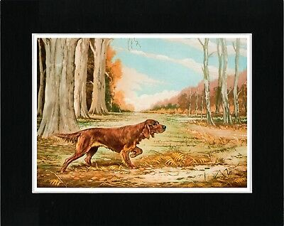 Irish Setter At Work Lovely Vintage Style Dog Art Print Ready Matted