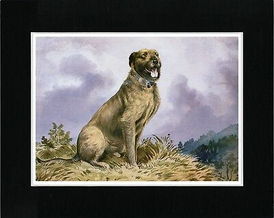Irish Wolfhound Lovely Vintage Style Dog Art Print Matted Ready To Frame
