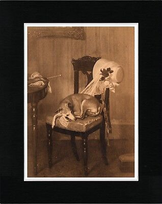Italian Greyhound Asleep On A Chair Lovely Vintage Style Dog Print Ready Matted