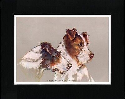 Jack Russell Wire Fox Terrier Head Study Vintage Style Dog Print Ready Matted
