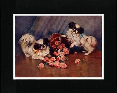 Japanese Chin Dogs With Basket Of Flowers Lovely Vintage Style Dog Print Matted