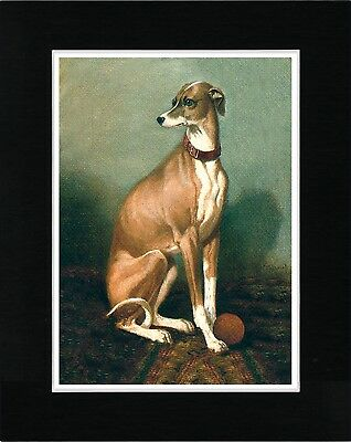 Italian Greyhound Lovely Image Vintage Style Dog Print Ready Matted