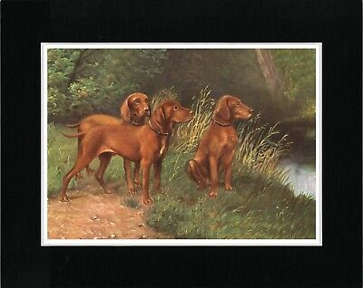 Hungarian Vizsla Group Of Dogs Vintage Style Dog Art Print Matted Ready To Frame
