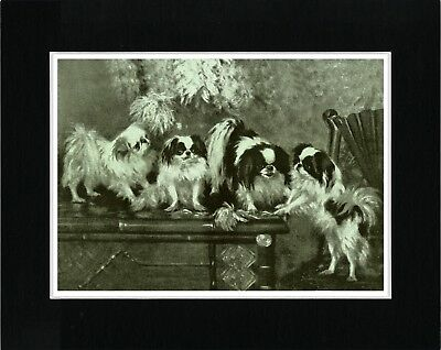 Japanese Chin Group Of Dogs Lovely Vintage Style Dog Print Ready Matted
