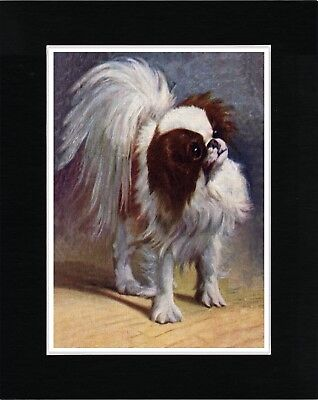 Japanese Chin Lovely Image Vintage Style Dog Art Print Matted Ready To Frame