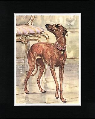 Italian Greyhound Lovely Image Vintage Style Dog Art Print Ready Matted