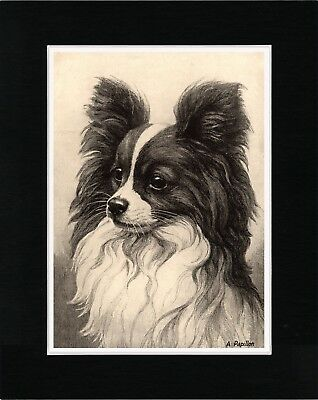 Papillon Head Study Lovely Vintage Style Dog Art Print Matted Ready To Frame