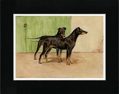 Manchester Terrier Two Dogs Vintage Style Dog Art Print Matted Ready To Frame