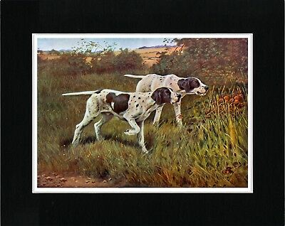 Pointer Dogs English At Work Lovely Vintage Style Dog Art Print Ready Matted