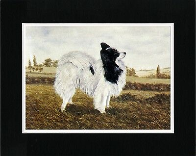 Papillon Little Dog Lovely Vintage Style Art Print Matted Ready To Frame