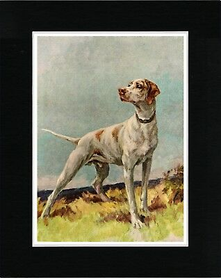Pointer Lovely English Vintage Style Dog Art Print Ready Matted
