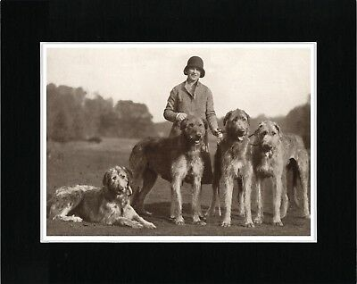 Lady And Her Irish Wolfhound Dogs Great Vintage Style Dog Print Ready Matted