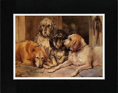 Otterhound Dogs At Rest Great Vintage Style Dog Print Ready Matted