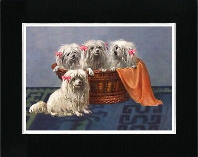 Maltese Dogs In A Basket Lovely Image Vintage Style Dog Art Print Ready Matted