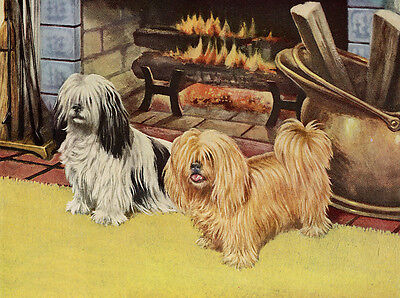 Lhasa Apso Charming Dog Greetings Note Card Beautiful Dogs By The Fire Side